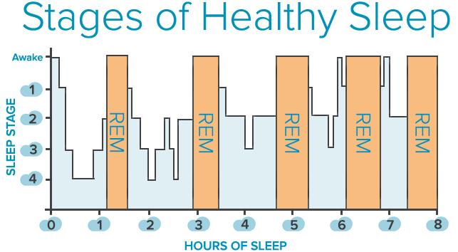 cicli del sonno